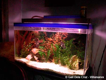 Gail's cool aquarium