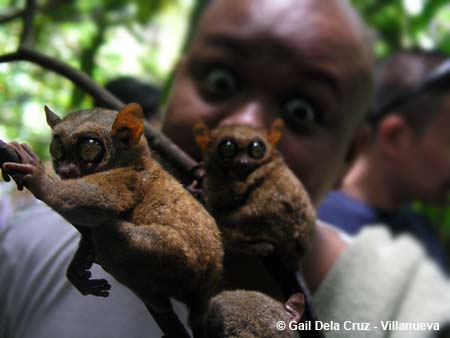 Tarsiers and Abe